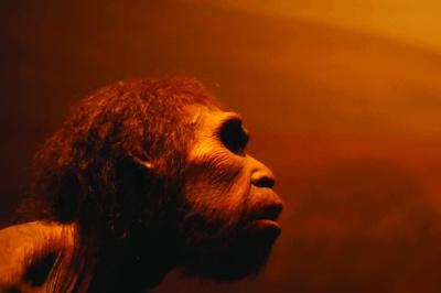 primer.humano
