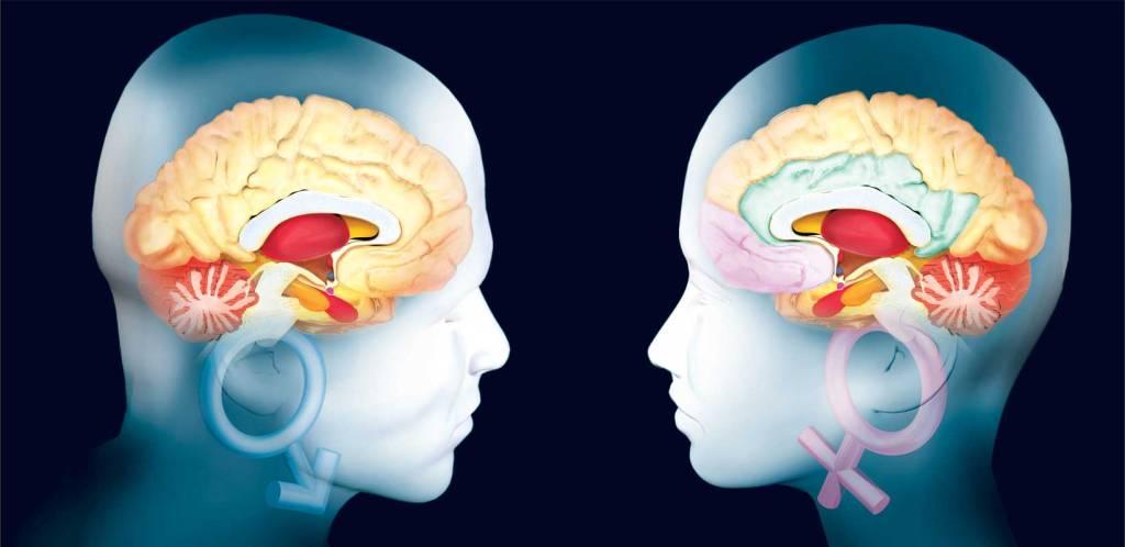 Resultado de imagen para el cerebro de las mujeres